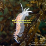 redgilled nudibranch wm title