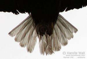Eagle Tail -- Very Close!